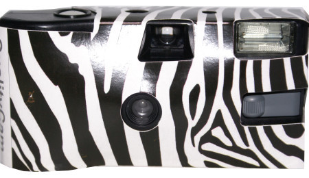 176_Black_and_white_Zebra